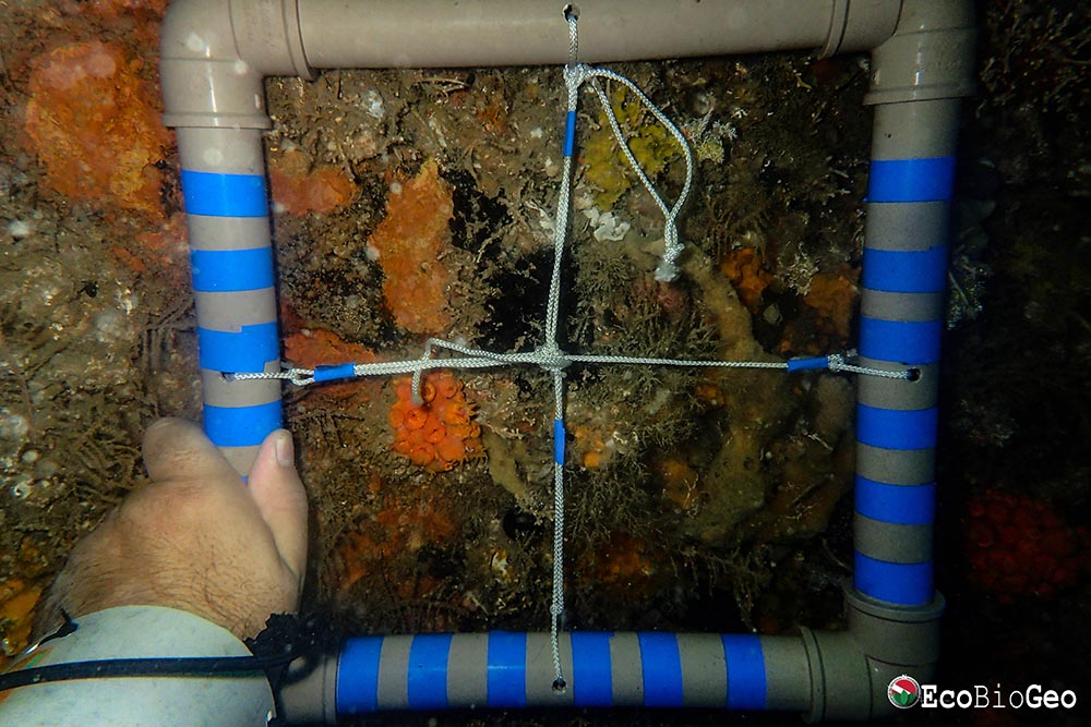 Mapeamento da ocorrência do Coral-Sol nos Deep Reefs de Salvador