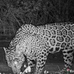 Diagnóstico de fauna nas áreas de influência do novo arranjo do Parque Eólico Castanheira