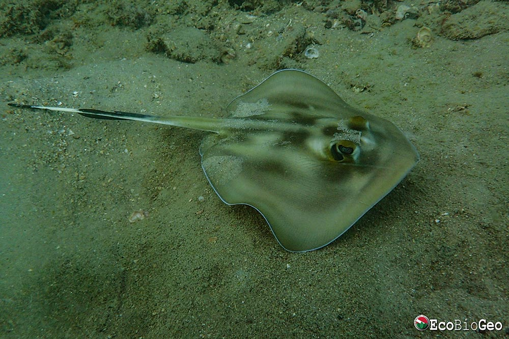 Monitoramento de longo prazo da ictiofauna associada ao naufrágio do clipper Blackadder