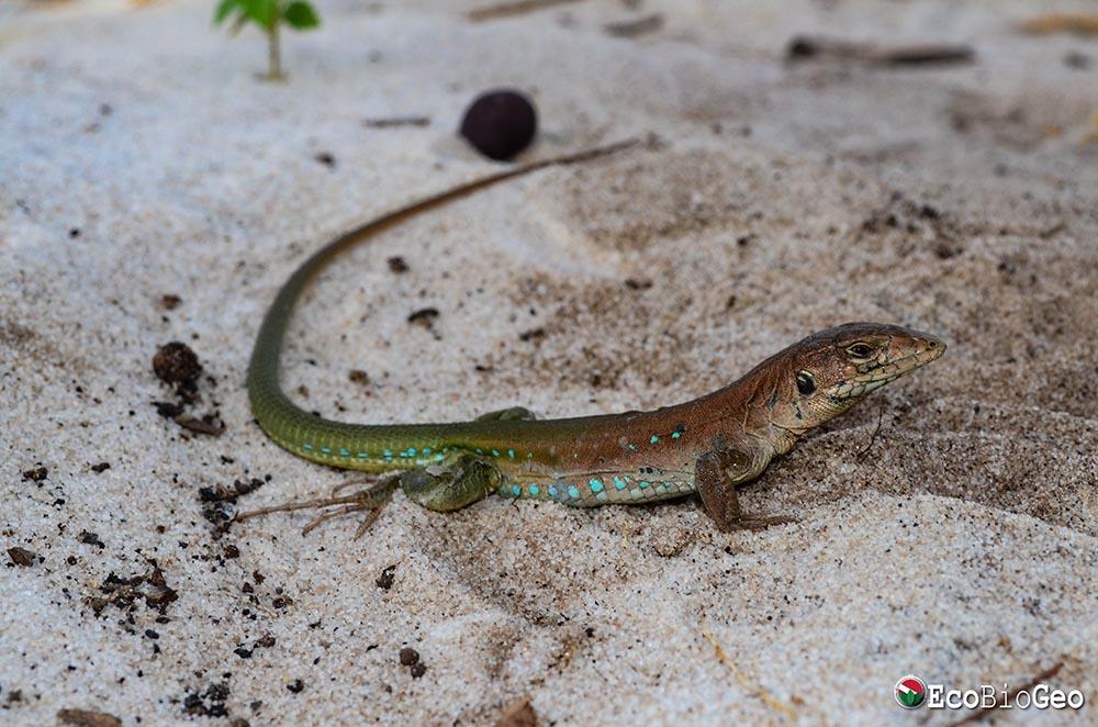 Monitoramento de fauna nas áreas de influência da UFV Sobrado